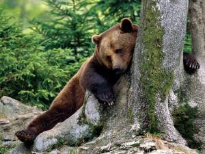 Rest_Stop_Brown_Bear-1600x1200