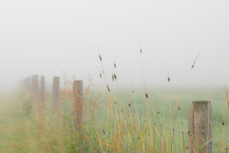 august fog-9
