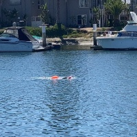 Swim Report - Belmont Shore. Around Naples Island.